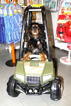 Higgins the shop dog at Totally Kids fun furniture and toys