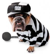 prisoner-dog1